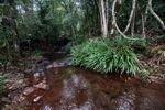 Rain forest creek in Taman Hutan Raya [kalsel_0141]