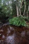 Rainforest creek in Taman Hutan Raya [kalsel_0142]