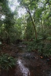 Rain forest creek in Taman Hutan Raya