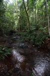Rainforest creek in Taman Hutan Raya [kalsel_0144]