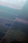 Perkebunan seperti yang terlihat dari pesawat di Kalimantan Selatan