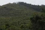 Deforestation in Taman Hutan Raya National Park [kalsel_0266]