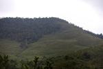 Deforestation in Taman Hutan Raya National Park
