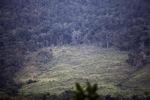 Deforestasi di Taman Hutan Raya Taman Nasional