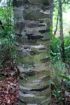 Tree with interesting bark pattern