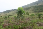 One Man One Tree reforestation project using Gmelia and Mahoni species [kalsel_0308]