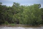 Mangroves near Banjarmasin [kalsel_0330]