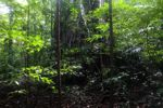Tangkoko hutan hujan