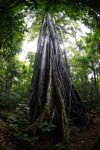 Rainforest in Tangkoko Nature Reserve. Photo by Rhett A. Butler