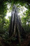 Rainforest in Tangkoko Nature Reserve. Photo by Rhett A. Butler