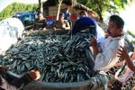 Hai Fa controversy just a hiccup in Indonesia's illegal fishing crackdown