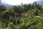 Deforestasi di tepi Tangkoko Cadangan