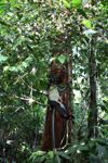 Thomas 'Daun Monyet di pohon