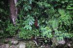 Ibu dan bayi orangutan di hutan