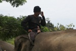 Mahout talking on his handphone from atop an elephant