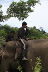 Mahout speaking on his mobile from atop an elephant