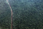 Logged and degraded forest in Jambi