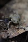 Strange toad