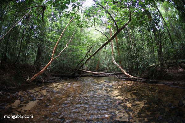 Clear water stream in Gunung Palung, Indonesian Borneo