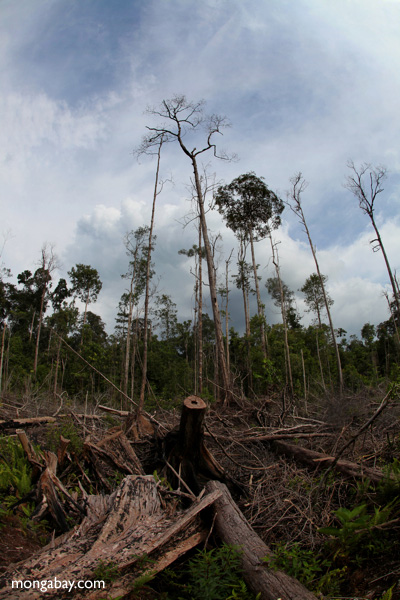 Devastated rainforest landscape in Borneo. Photo by Rhett A. Butler.
