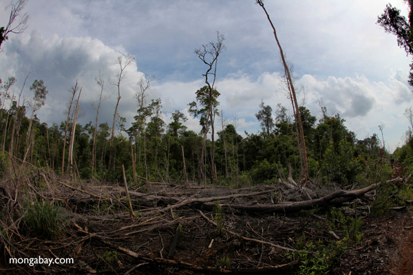 Devastated rainforest landscape in Borneo