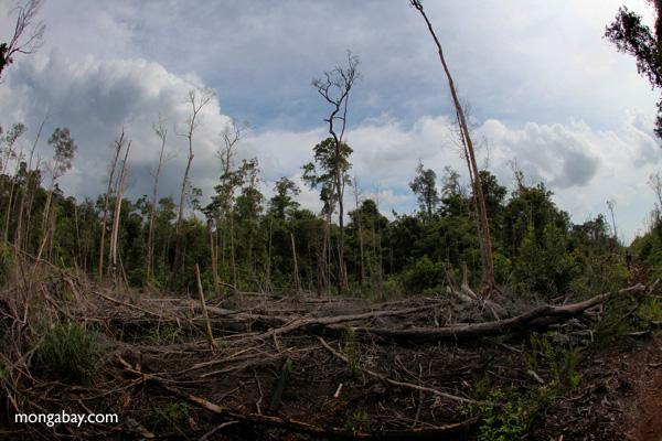 Devastated rainforest landscape in Borneo [kalbar_1100]