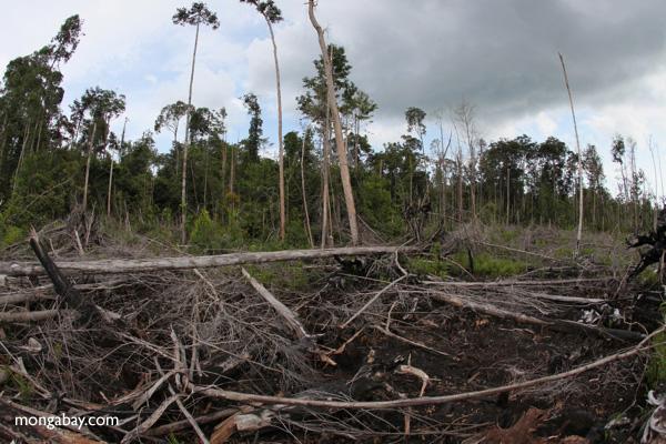 Devastated rain forest landscape in Borneo [kalbar_1161]