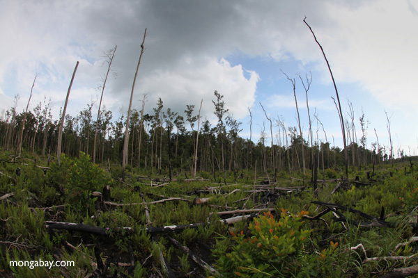 Devastated rain forest landscape in Borneo