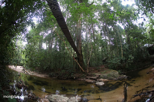 Bridge over a rainforest creek