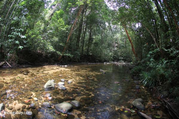 Clearwater jungle stream in Borneo