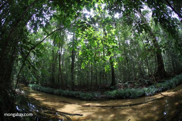 Hutan Indonesia yang penting sebagai paru-paru dunia. Foto: Rhett Butler