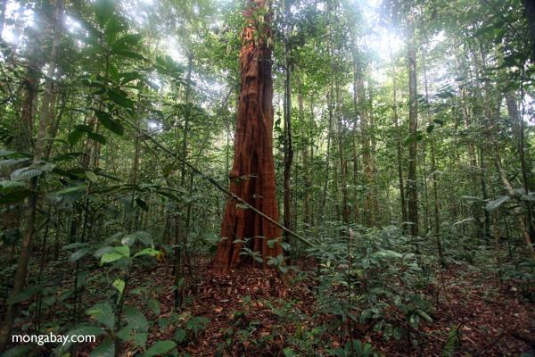 West Kalimantan, Borneo