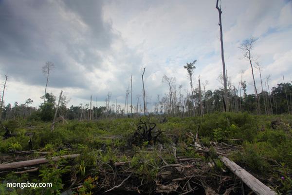 Deforested rainforest in Borneo [kalbar_2250]