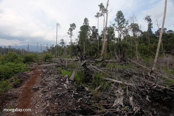Deforested peatlands in West Kalimantan. Photo: Rhett A. Butler