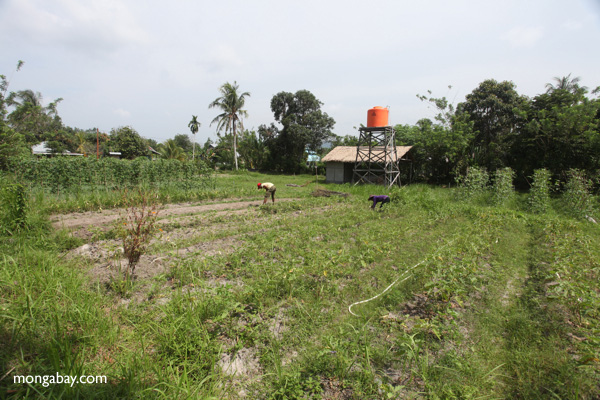 Organic farm in Indonesian Borneo. Photo by: Rhett A. Butler.