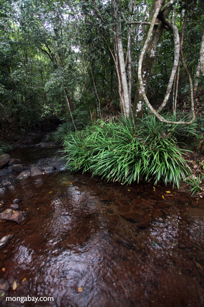 Rainforest creek in Taman Hutan Raya