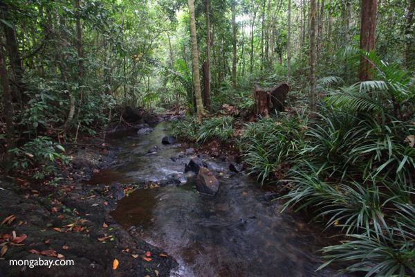 Rainforest creek in Taman Hutan Raya, South Kalimantan, Borneo