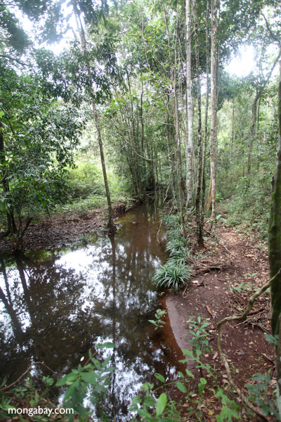Forest stream in Taman Hutan Raya National Park