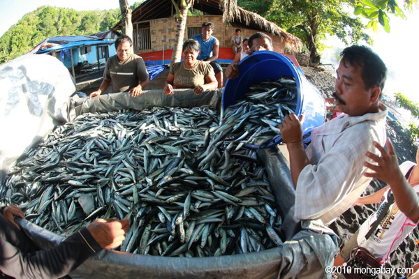 Fish being loaded into a truck for processing and export in Batu Putih, North Sulawesi. Photo by Rhett A. Butler.