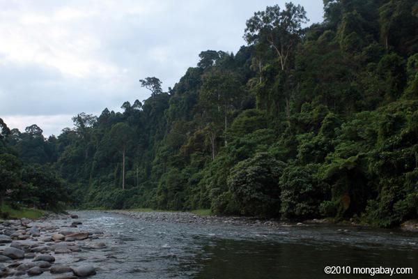 Sungai hutan hujan yang membentuk perbatasan tn gunung leuser didekat