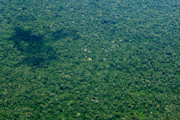Aerial view of Yasuni National Park. Notice tree in center with yellow blooms. Photo by: Jeremy Hance.