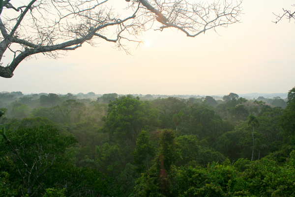 Rainforest in Yasuni National Park. Photo by: Jeremy Hance.