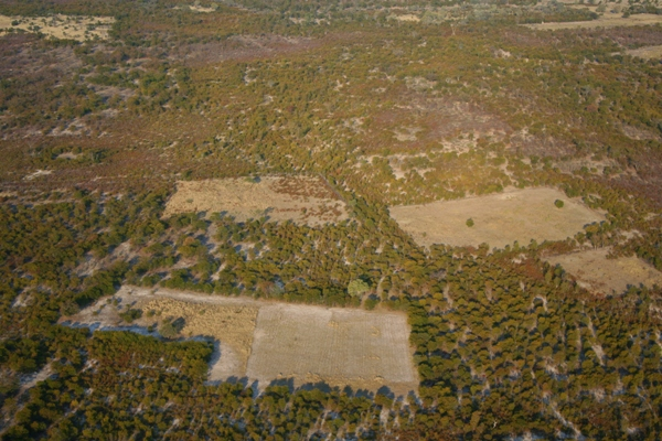 Habitat loss in the Okavango Delta in Botswana. Photo by: Rhett A. Butler.