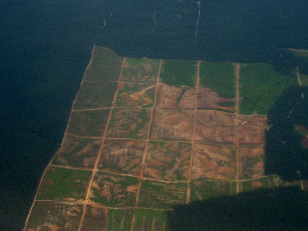 aerial view of deforestation in sabah  malaysia