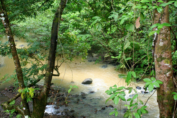River near lodge in the Tabin Wildlife Reserve in Sabah, Malaysia