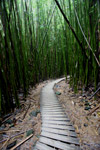 Path through Haleakala bamboo forest