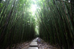 Trail through Haleakala bamboo forest
