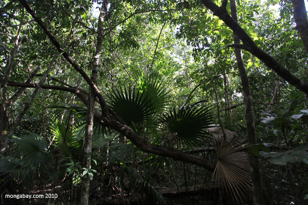 Mexican rainforest
