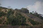 Forest clearing along the Panama Canal