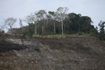 Clearing of a forested hillside